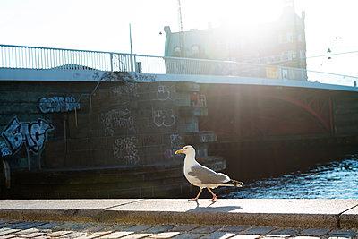 Kopenhagen - p608m1591076 von Jens Nieth