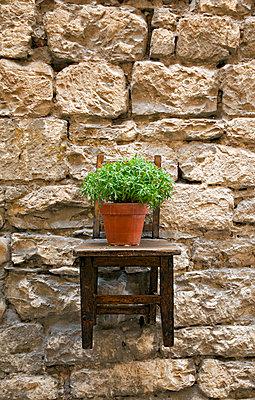 Hängender Stuhl mit Blumentopf - p382m1525173 von Anna Matzen