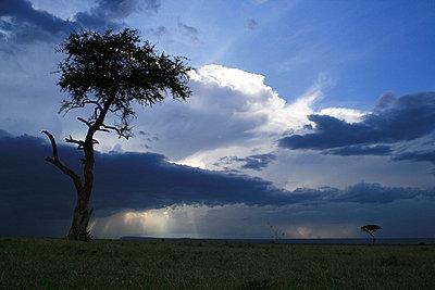 Narok in Kenia - p5330129 von Böhm Monika
