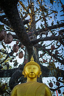 Temple with ancient decorated tree, Oudom Xai - p934m1022194 by Sebastien Loffler