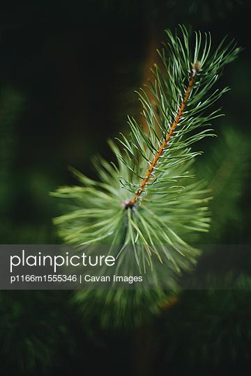 p1166m1555346 von Cavan Images