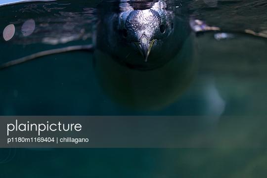 Pinguin unter Wasser - p1180m1169404 von chillagano