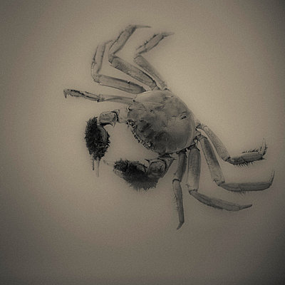 Crab in Museum - p1072m993346 by Neville Mountford-Hoare