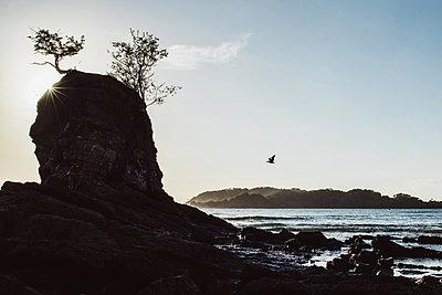 Felsen am Strand - p1326m2063200 von kemai