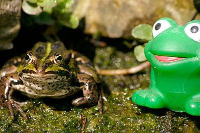 Toad - p1790191d by Roland Schneider