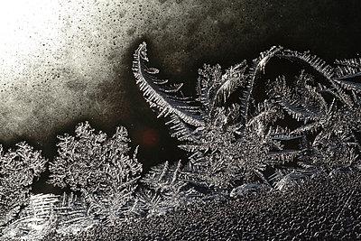 Frostblumen am Fenster - p235m904260 von KuS