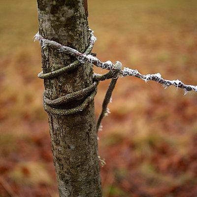 Wooden stake - p8130230 by B.Jaubert
