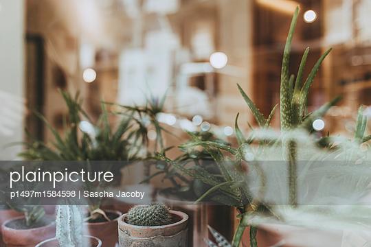 Pflanzen im Schaufenster - p1497m1584598 von Sascha Jacoby