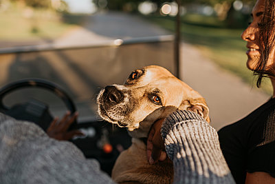 Man and woman sitting with dog while driving golf cart on road - p300m2227149 by Sara Monika