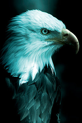 Head of an eagle - p4511018 by Anja Weber-Decker