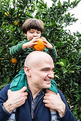 Picking Oranges - p535m965949 by Michelle Gibson