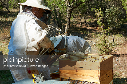 Apiarist working with your bees to achieve sweet honey - p1166m2269573 by Cavan Images