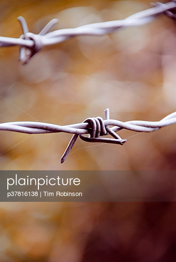 Barbed wire close up - p37816138 by Tim Robinson