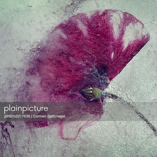 Mohnblume abstrakt - p992m2217636 von Carmen Spitznagel
