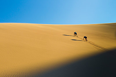 Hispanic couple climbing sand dune - p555m1478048 by Michael DeYoung