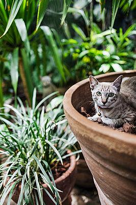Cat in flowerpot - p728m2219751 by Peter Nitsch
