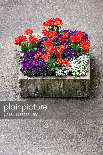 Plant container - p248m1138739 by BY