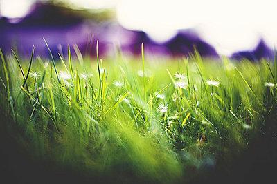 Grass - p1002m740751 by christian plochacki