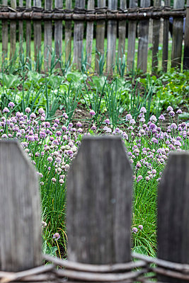Garden fence - p253m813549 by Oscar