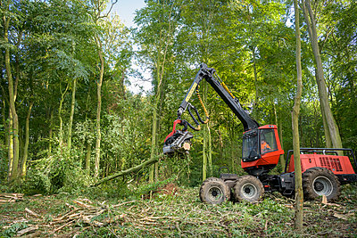 Tree harvesting machine cutting trees in sustainable forest - p924m2271158 by Monty Rakusen