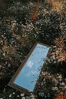 Sweden, Mirror on a flower field - p1507m2196139 by Emma Grann