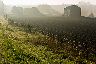 Morning mist over field and outbuilding, Bradford, Ontario - p6071532 by Jim Craigmyle