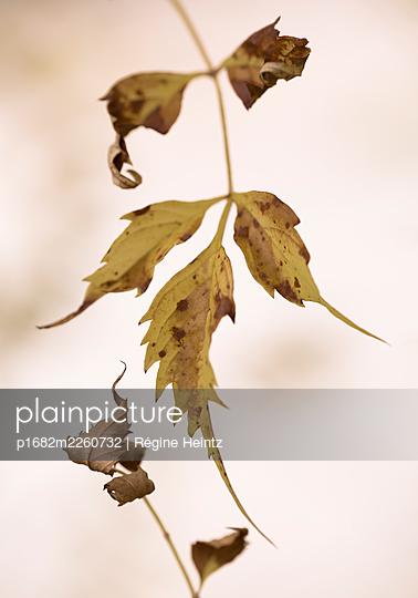 Autumn - p1682m2260732 by Régine Heintz