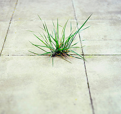 Patch of grass growing through gap in patio - p1072m857528 by Neville Mountford-Hoare