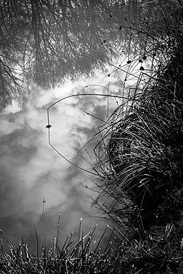 Tall grass at the edge of a pond - p1682m2260758 by Régine Heintz