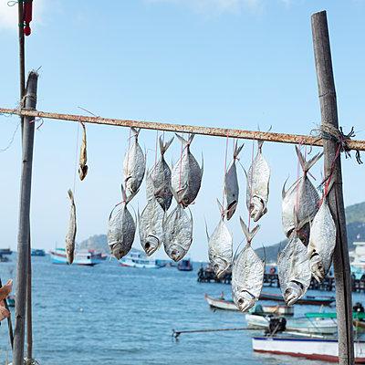 Fische an einem Trockengestell - p1138m2203660 von Stéphanie Foäche