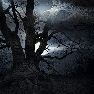 In the Dark - p1633m2211088 by Bernd Webler