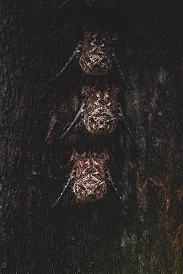 Drei Fledermäuse - p1326m2063171 von kemai