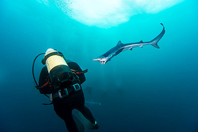 South Africa, diver and blue shark - p300m1029082f by Gerald Nowak