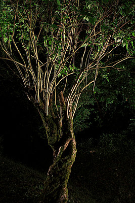 Knobby tree in the night - p567m720754 by Edouard Roussel