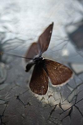 Butterfly - p971m740862 by Reilika Landen