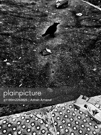 France, A crow in Paris - p1189m2263825 by Adnan Arnaout