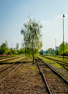 Tree on Tracks - p1082m1564547 by Daniel Allan