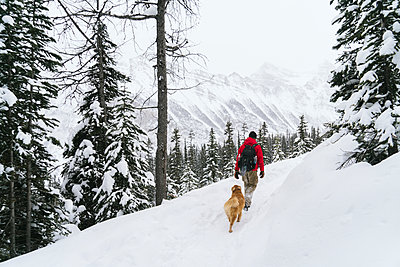 Rear view of hiker with Golden Retriever walking snow covered field at forest - p1166m1485214 by Cavan Images