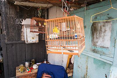 Birdcage - p795m1161283 by Janklein