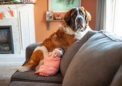 Newborn baby girl snuggling with large dog at home on the couch - p1166m2136600 by Cavan Images
