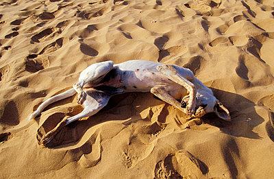 Schlafender Hund - p2200135 von Kai Jabs