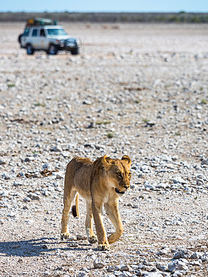 Lioness - p300m1130092f by Martin Moxter