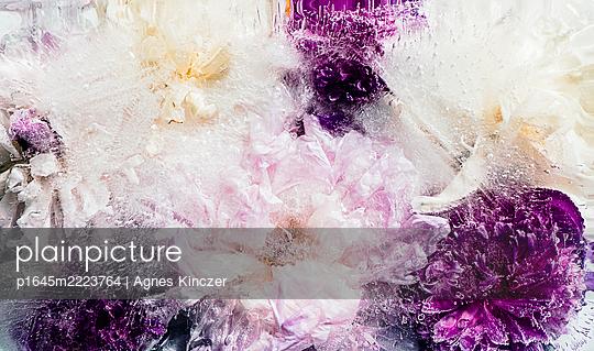 Eisblume - p1645m2223764 von Agnes Kinczer