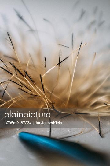 Feather - p795m2187234 by JanJasperKlein