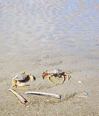 Strandkrabben und Stabmuscheln - p606m890816 von Iris Friedrich