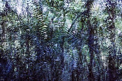 Dschungel Künstlerische Darstellung - p719m2044629 von Rudi Sebastian