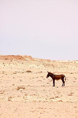 p754m1445599 by Valea Diller-El Khazrajy