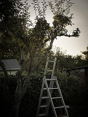 Gartenarbeit - p8430045 von Rea Stein