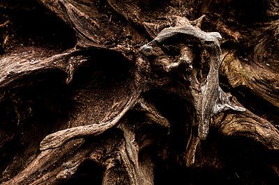 Dead tree - p947m2273188 by Cristopher Civitillo