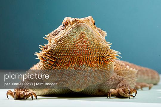 plainpicture - plainpicture p1100m2002233 - Studio portrait of Bearded ... - plainpicture/Mint Images
